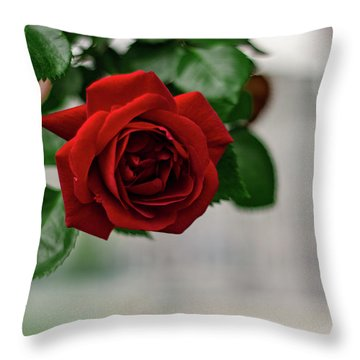 Roses In The City Park Throw Pillow