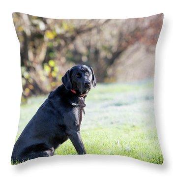 Ryder A Throw Pillow