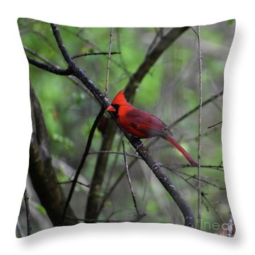 Throw Pillow featuring the photograph Saint Louis by Skip Willits