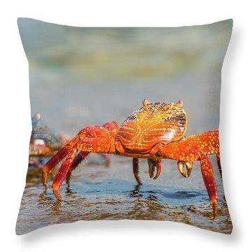 Sally Lightfoot Crab On Galapagos Islands Throw Pillow