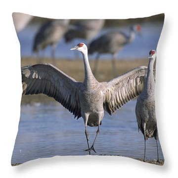 Sandhill Cranes Roost Along The Platte Throw Pillow