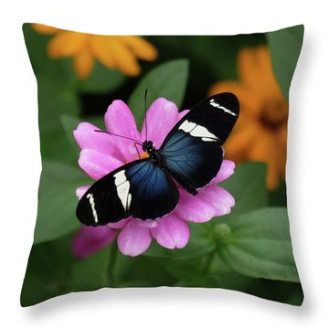 Sara Longwing Butterfly Throw Pillow