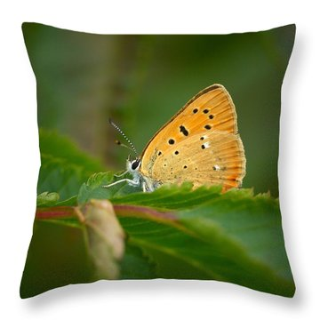 Throw Pillow featuring the photograph Scarce Copper by Jouko Lehto