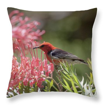 Scarlet Honeyeater Throw Pillow