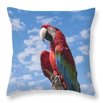 Scarlet Macaw Throw Pillow by Kim Hojnacki
