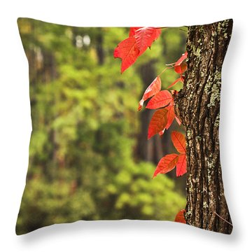Scenic Elder Lake Throw Pillow