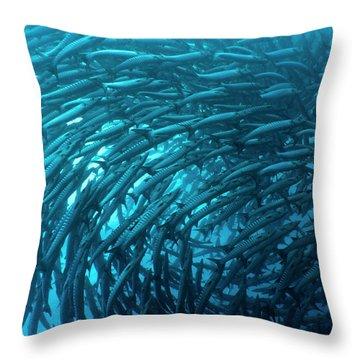 School Of Barracudas Underwater Throw Pillow by MotHaiBaPhoto Prints