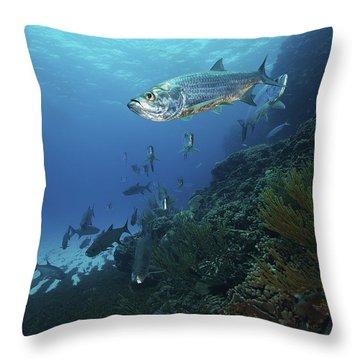 School Of Tarpon, Bonaire, Caribbean Throw Pillow by Terry Moore