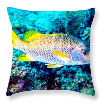 Throw Pillow featuring the photograph Schoolmaster Snapper by Perla Copernik