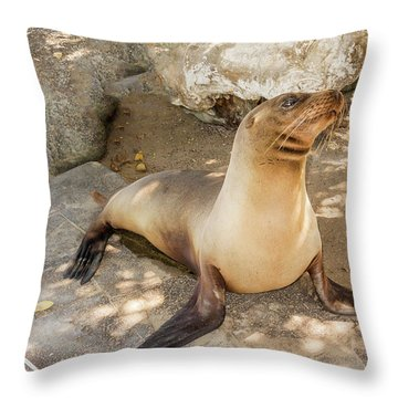 Sea Lion On The Beach, Galapagos Islands Throw Pillow