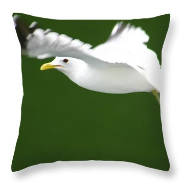 Throw Pillow featuring the photograph Seagull At The Fjord by KG Thienemann