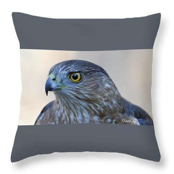 Sharp-shinned Hawk Throw Pillow by Diane Giurco