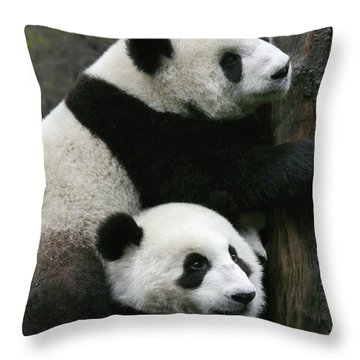 Sichuan Giant Panda Sanctuary, China Throw Pillow