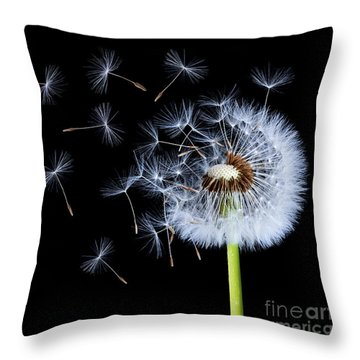 Silhouettes Of Dandelions Throw Pillow by Bess Hamiti