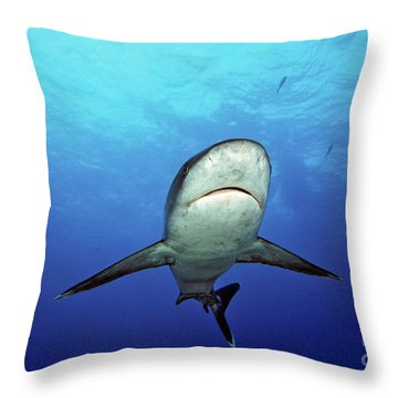 Silvertip Shark Throw Pillow by Dave Fleetham - Printscapes
