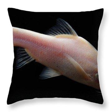 Small Eye Golden Line Barbel Throw Pillow