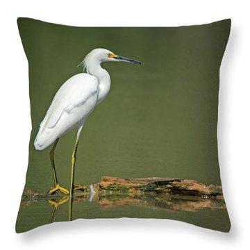 Snowy Egret Throw Pillow by Tam Ryan