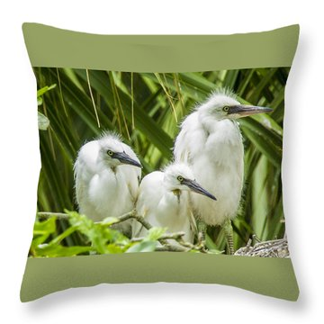 Throw Pillow featuring the photograph Snowy Egret Chicks by Paula Porterfield-Izzo