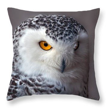 Snowy Owl Portrait Throw Pillow