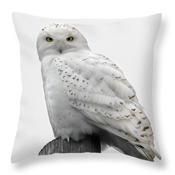 Snowy Owl Throw Pillow by Timothy McIntyre