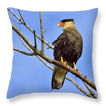 Throw Pillow featuring the photograph Southern Comfort by Tony Beck