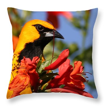 Spot Breasted Oriole Throw Pillow