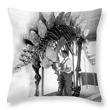 Stegosaurus Throw Pillow by Science Source