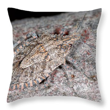 Throw Pillow featuring the photograph Stink Bug by Breck Bartholomew