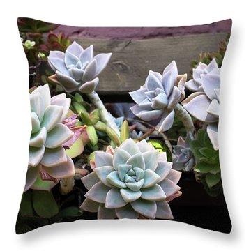 Succulents Throw Pillow by Catherine Lau