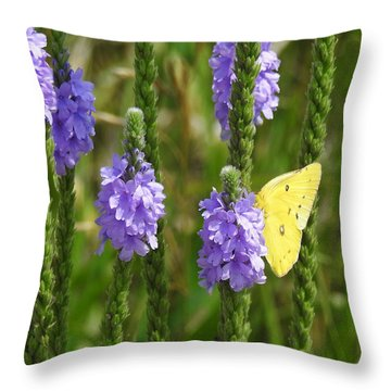 Sulfur Butterfly Throw Pillow