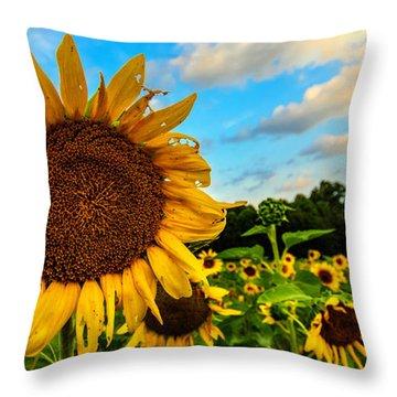Summer Suns  Throw Pillow