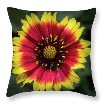 Throw Pillow featuring the photograph Sunflower by Ed Clark