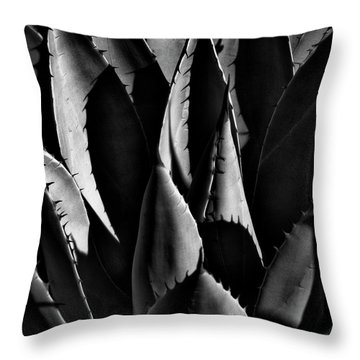Sunlit Cactus Throw Pillow by David Patterson