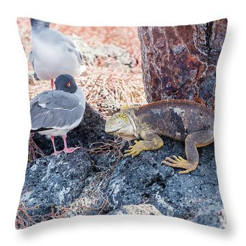 Swallow Tailed Gull And Iguana On  Galapagos Islands Throw Pillow