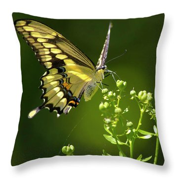 Throw Pillow featuring the photograph Elegant Swallowtail Butterfly by Christina Rollo