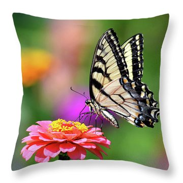 Throw Pillow featuring the photograph Swallowtail On A Zinnia by Rodney Campbell
