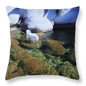 Throw Pillow featuring the photograph Tahoe Wild  by Sean Sarsfield