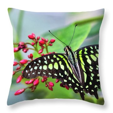 Throw Pillow featuring the photograph Tailed Green Jay Butterfly  by Saija Lehtonen