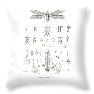 Throw Pillow featuring the drawing Termites, Macrotermes Bellicosus by H Hagen