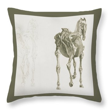 The Anatomy Of The Horse Throw Pillow