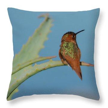 Allens Hummingbird Throw Pillows