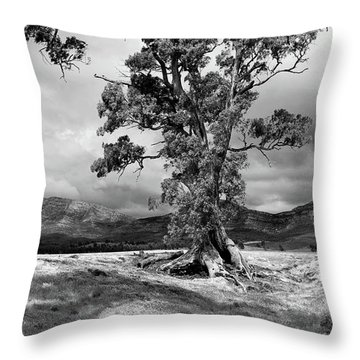 The Cazneaux Tree Throw Pillow by Bill Robinson