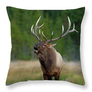 Throw Pillow featuring the photograph The Challenger by Sandra Bronstein