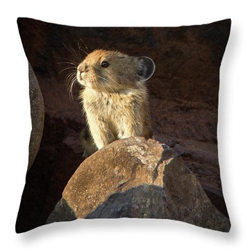 The Coast Is Clear Wildlife Photography By Kaylyn Franks Throw Pillow
