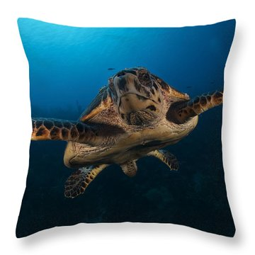 The Hawksbill Sea Turtle, Bonaire Throw Pillow by Terry Moore