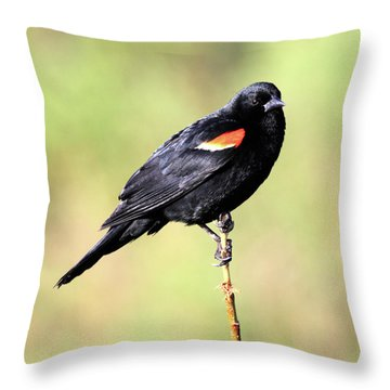 Throw Pillow featuring the photograph The Look by Shane Bechler