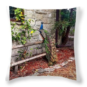 Beautiful Peacock Throw Pillow