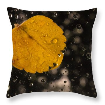 This One Followed Me Home... Throw Pillow by Craig Szymanski
