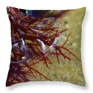 Tidepool Seaweed Throw Pillow