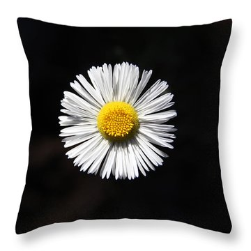 Tidy Fleabane Throw Pillow by Charles Ables